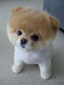 Очень маленькая собака