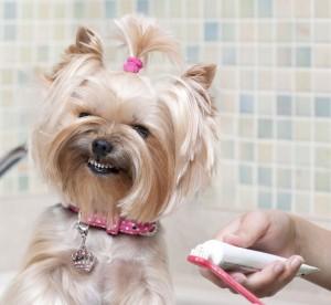 Гигиена собаки