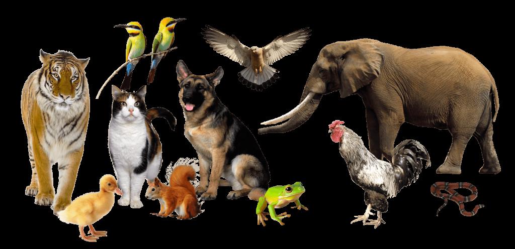 Все животные мира