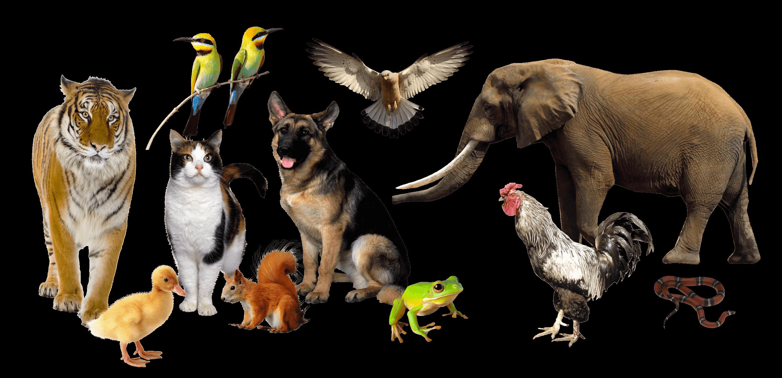 домашние животные на которых не бывает аллергии