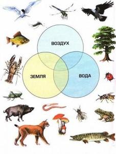 Животные: определение и классификация