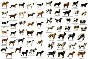 400 пород собак