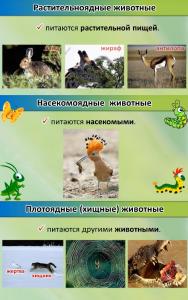 Чем питаются животные