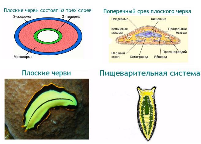 паразиты в человеке вред