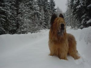 Бриар в зимнем лесу