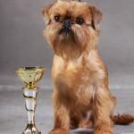 Брюссельский гриффон - чемпион