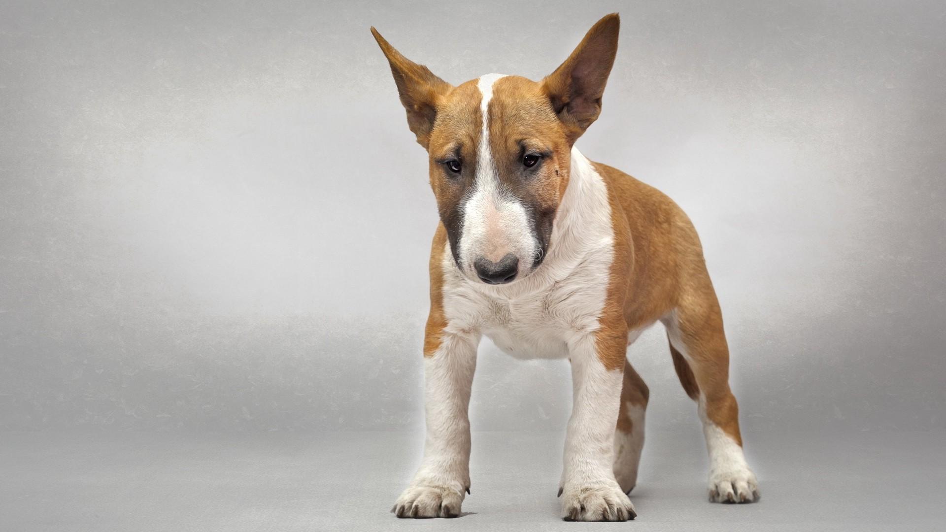 как знакомить щенка с другими домашними животными