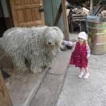 Венгерские овчарки внимательны к детям