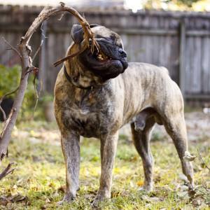 Агент по кличке спот порода собаки